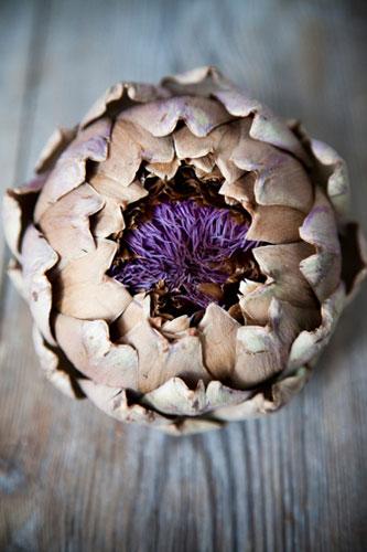 Flowering-Artichoke